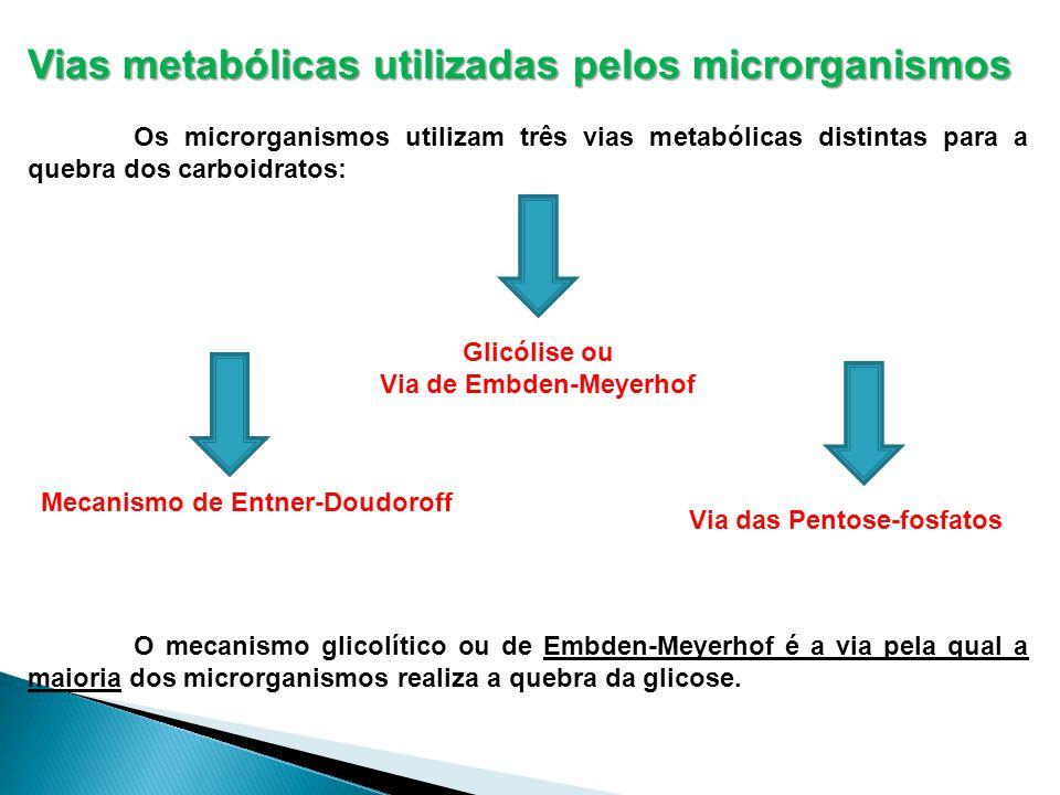 Vias metabólicas utilizadas pelos microrganismos