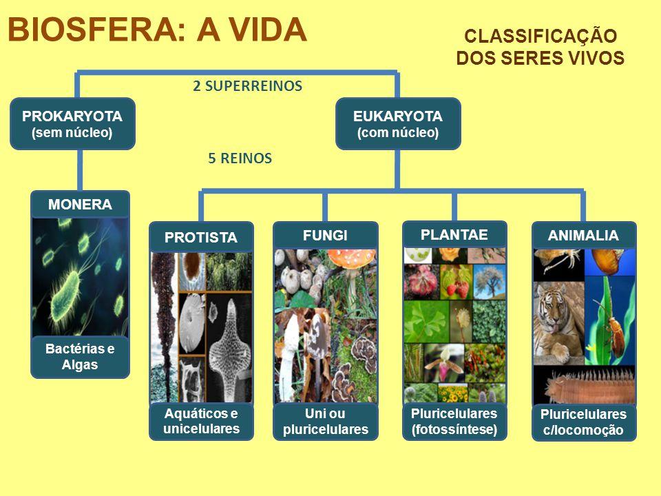 BIOSFERA: A VIDA CLASSIFICAÇÃO DOS SERES VIVOS 2 SUPERREINOS 5 REINOS