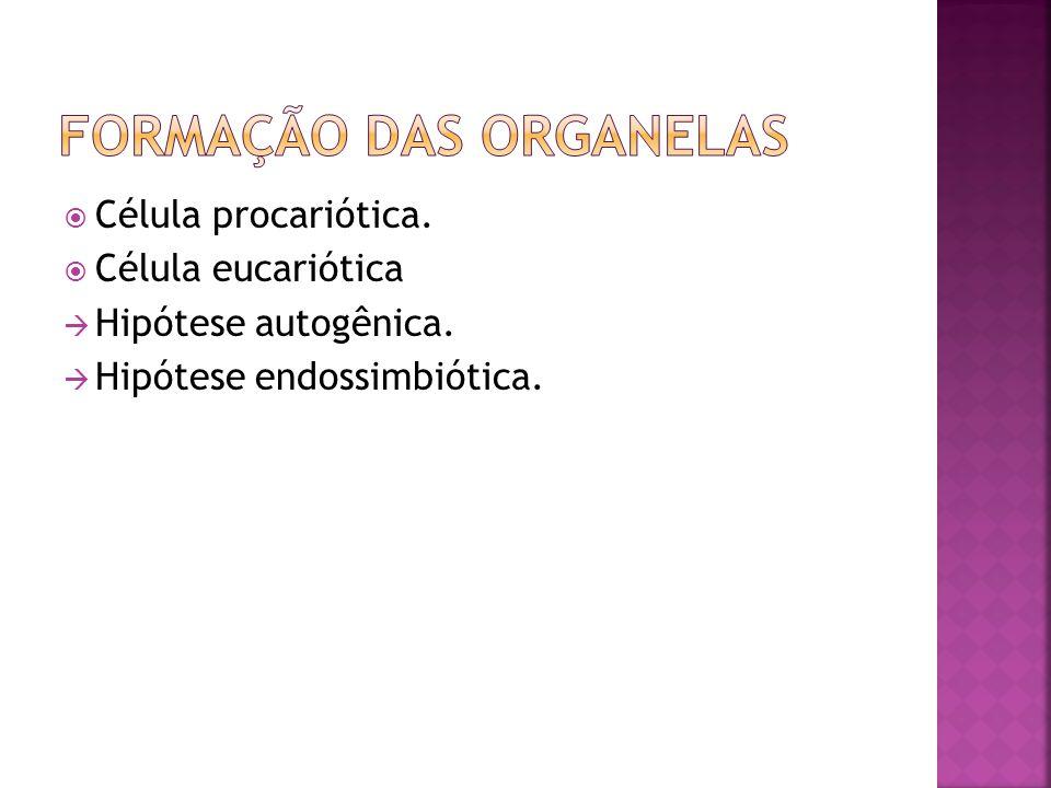 Formação das Organelas