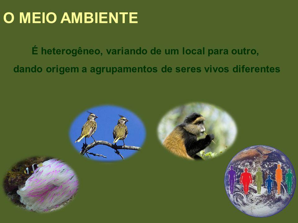O MEIO AMBIENTE É heterogêneo, variando de um local para outro,