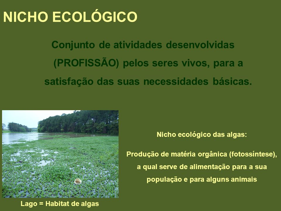 NICHO ECOLÓGICO Conjunto de atividades desenvolvidas (PROFISSÃO) pelos seres vivos, para a satisfação das suas necessidades básicas.