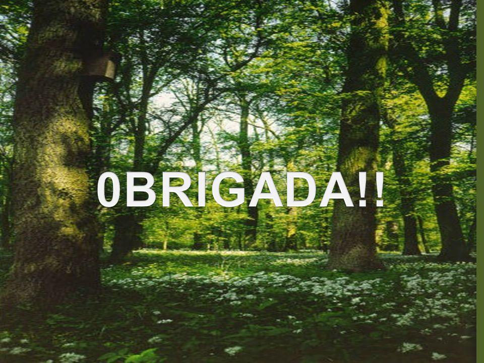 0BRIGADA!!