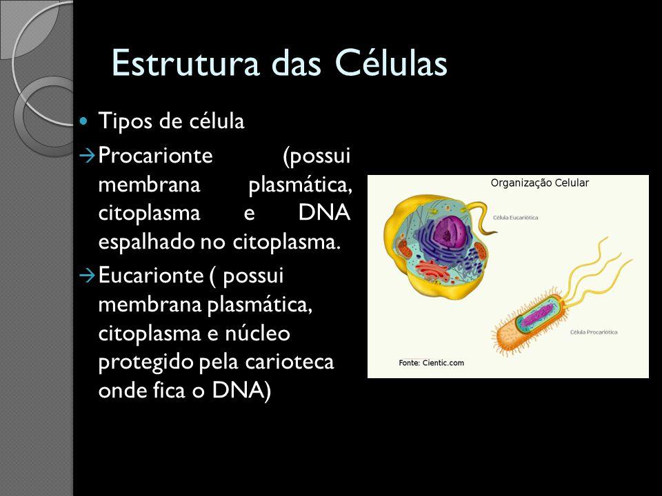 Estrutura das Células Tipos de célula