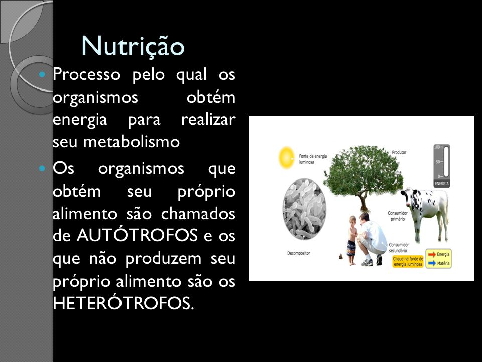 Nutrição Processo pelo qual os organismos obtém energia para realizar seu metabolismo.