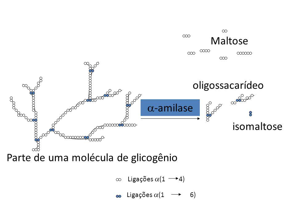 Parte de uma molécula de glicogênio