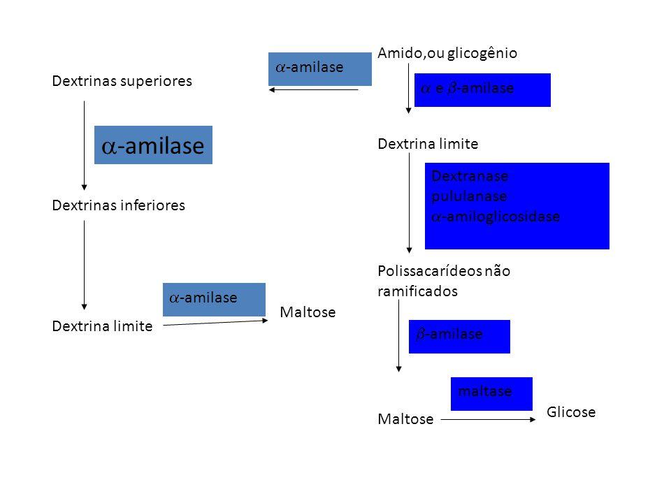 -amilase Amido,ou glicogênio -amilase Dextrinas superiores