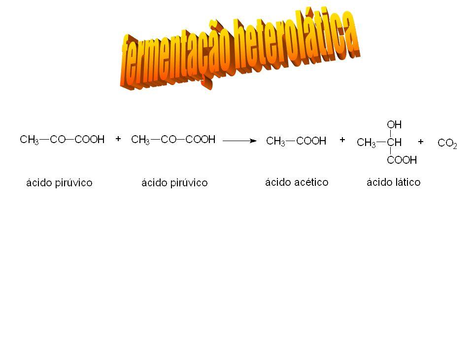 fermentação heterolática