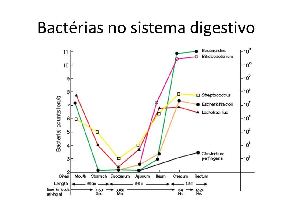 Bactérias no sistema digestivo