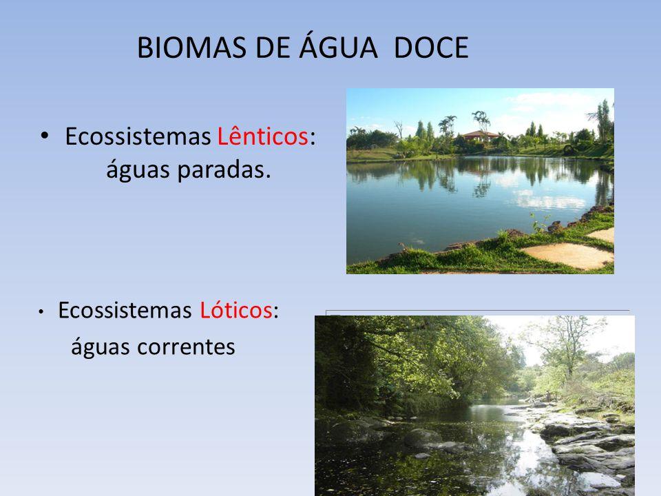 BIOMAS DE ÁGUA DOCE Ecossistemas Lênticos: águas paradas.