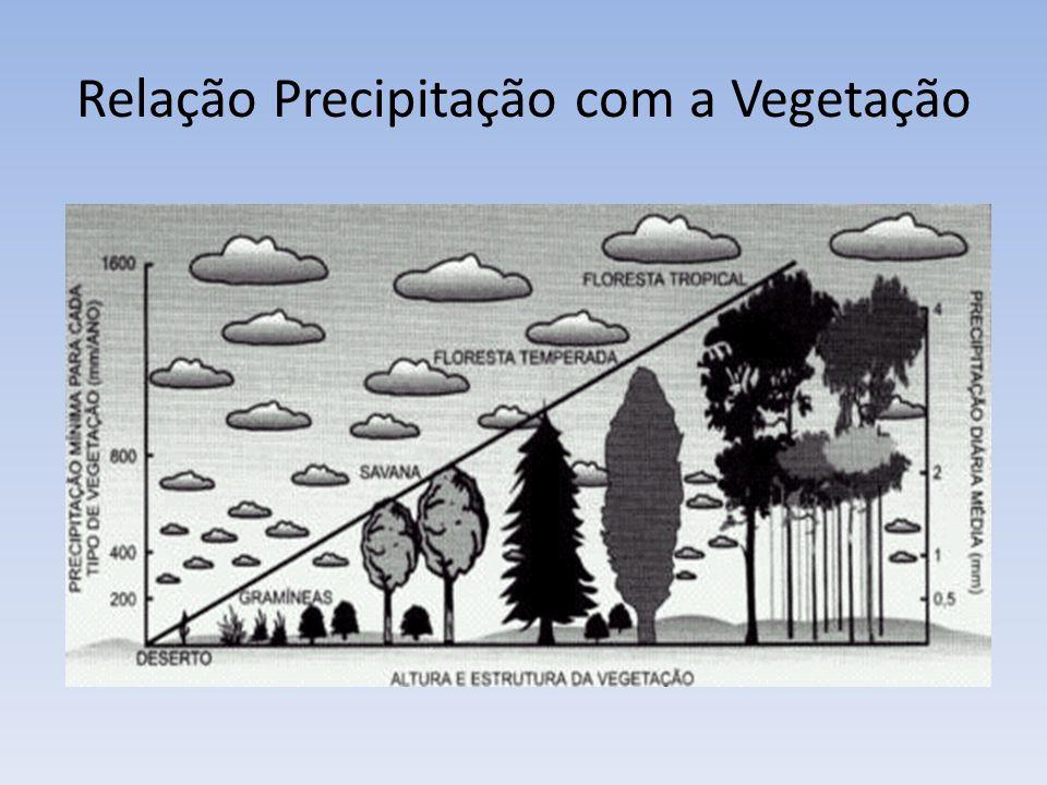 Relação Precipitação com a Vegetação