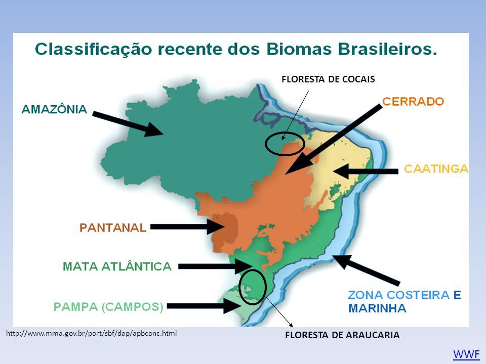 WWF FLORESTA DE COCAIS FLORESTA DE ARAUCARIA