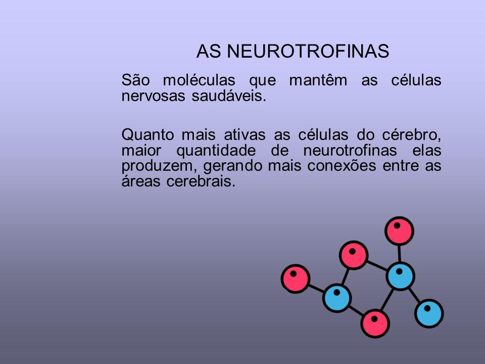AS NEUROTROFINAS São moléculas que mantêm as células nervosas saudáveis.