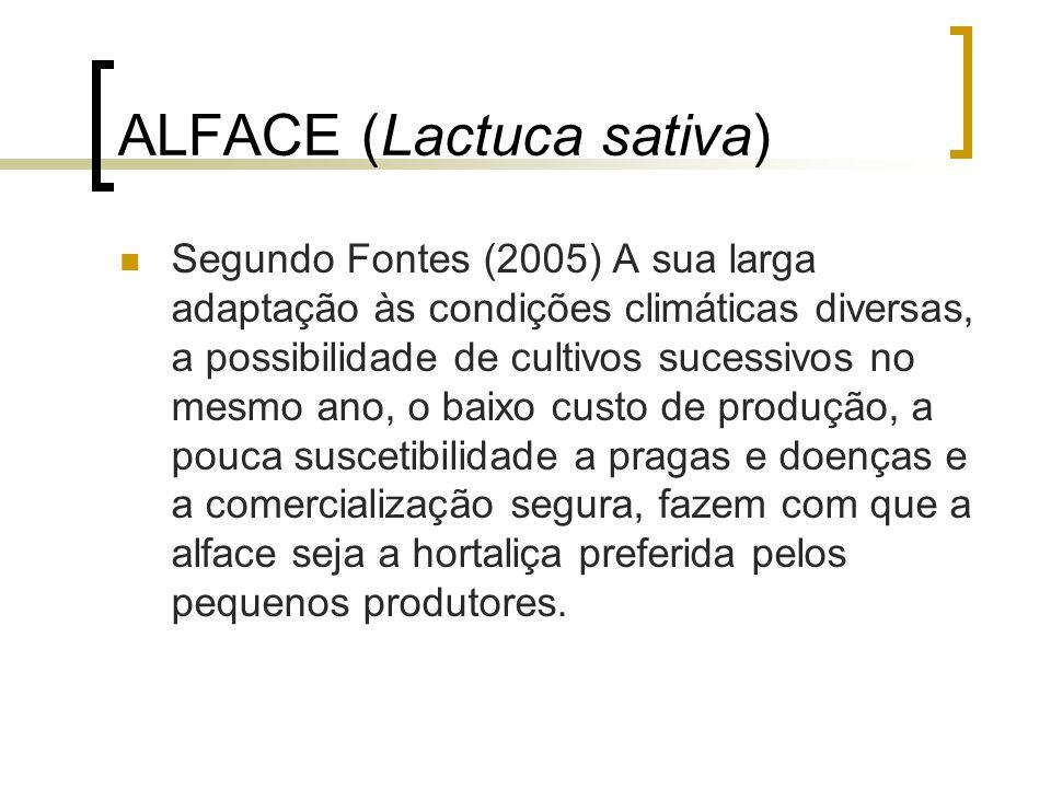ALFACE (Lactuca sativa)