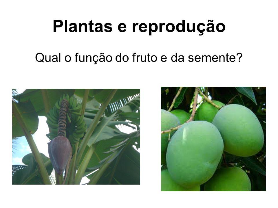 Qual o função do fruto e da semente