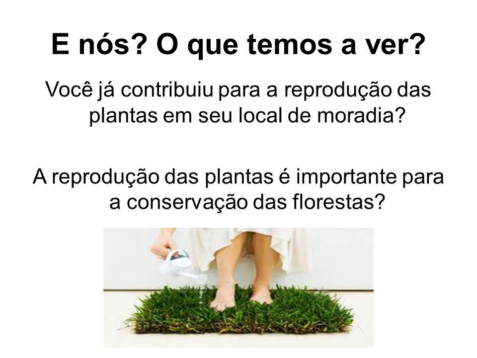 E nós O que temos a ver Você já contribuiu para a reprodução das plantas em seu local de moradia