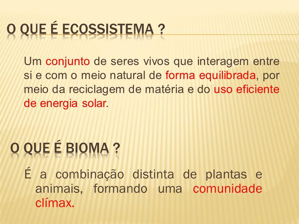 O que é Ecossistema O que é Bioma