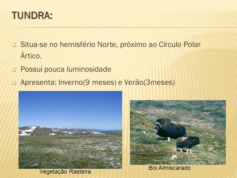 TUNDRA: Situa-se no hemisfério Norte, próximo ao Círculo Polar Ártico.
