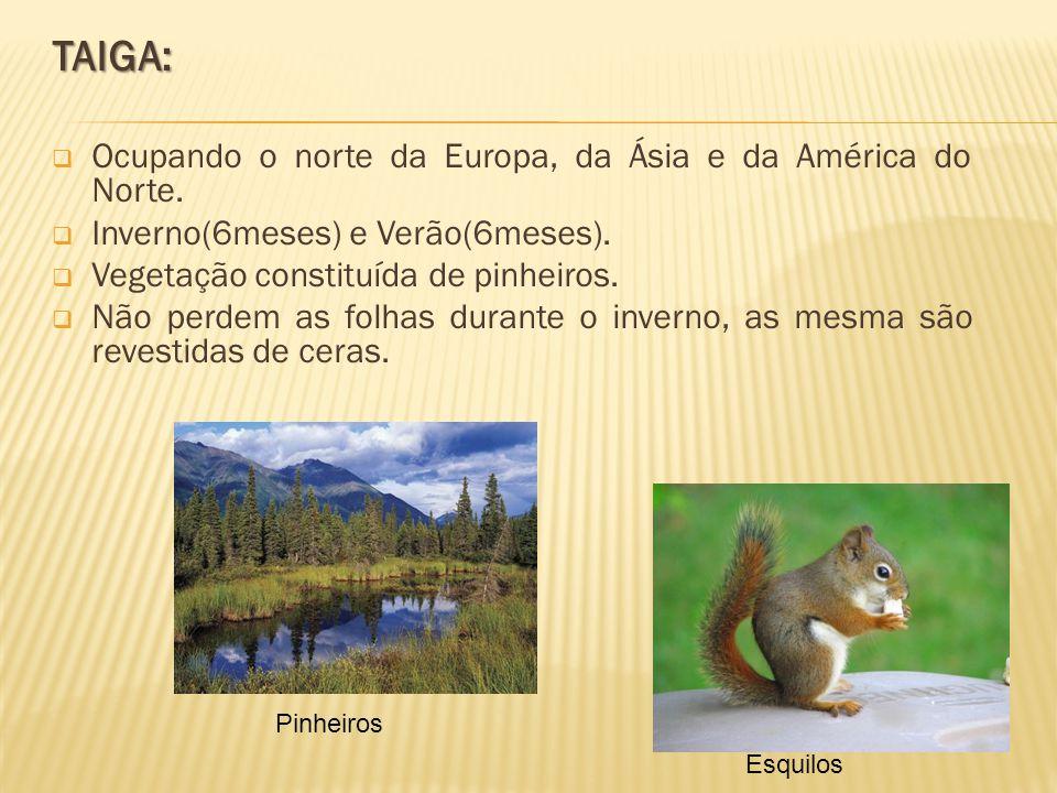 TAIGA: Ocupando o norte da Europa, da Ásia e da América do Norte.