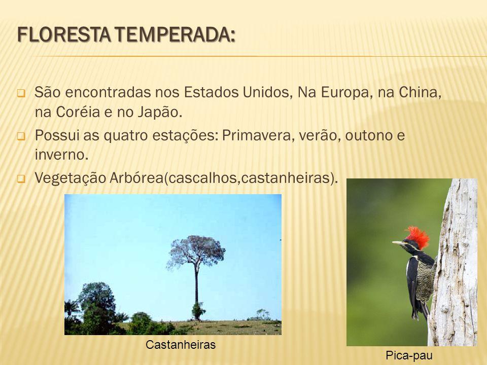 FLORESTA TEMPERADA: São encontradas nos Estados Unidos, Na Europa, na China, na Coréia e no Japão.