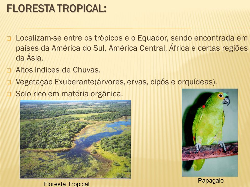 FLORESTA TROPICAL: