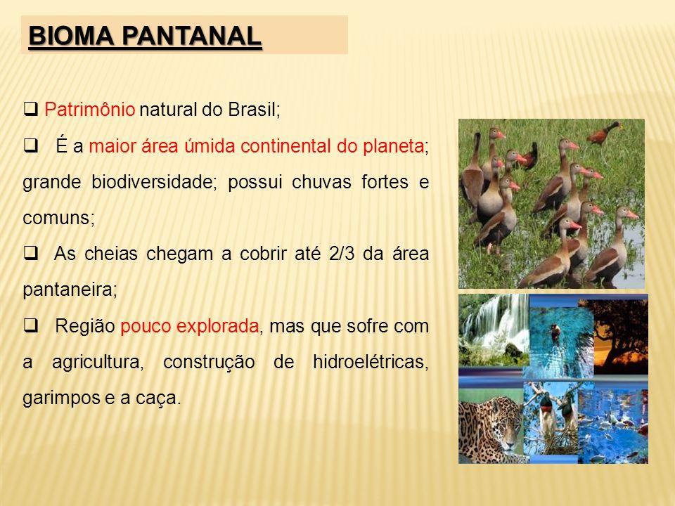 BIOMA PANTANAL Patrimônio natural do Brasil;
