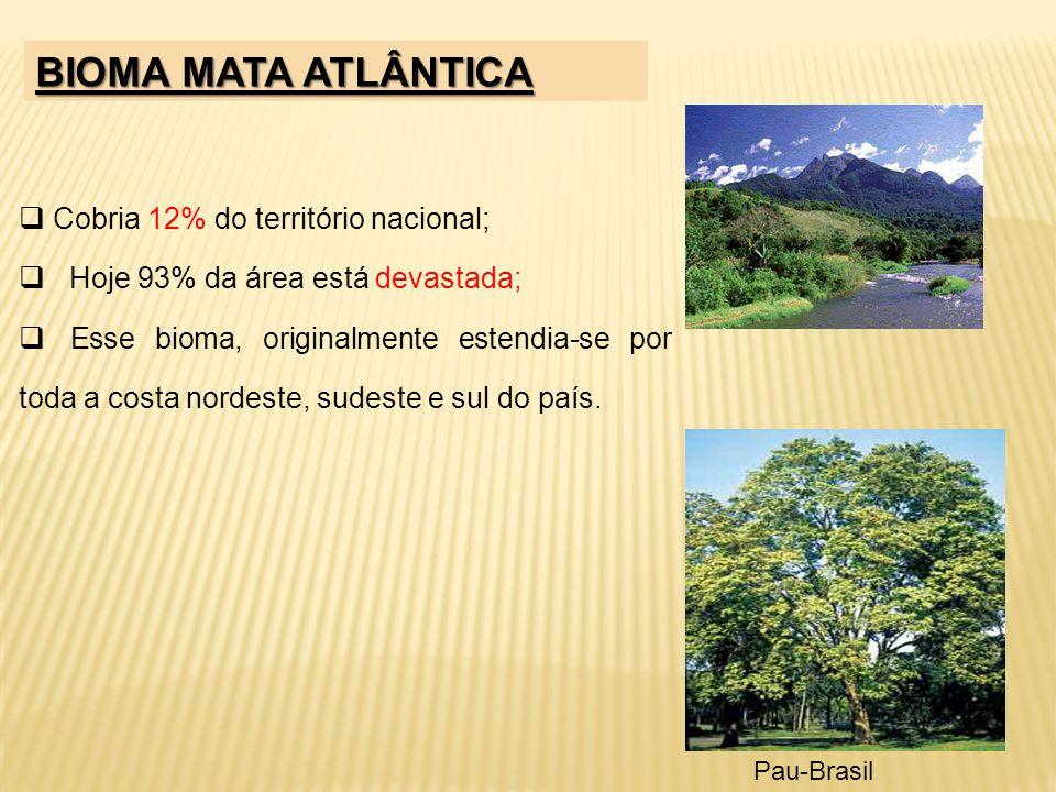 BIOMA MATA ATLÂNTICA Cobria 12% do território nacional;