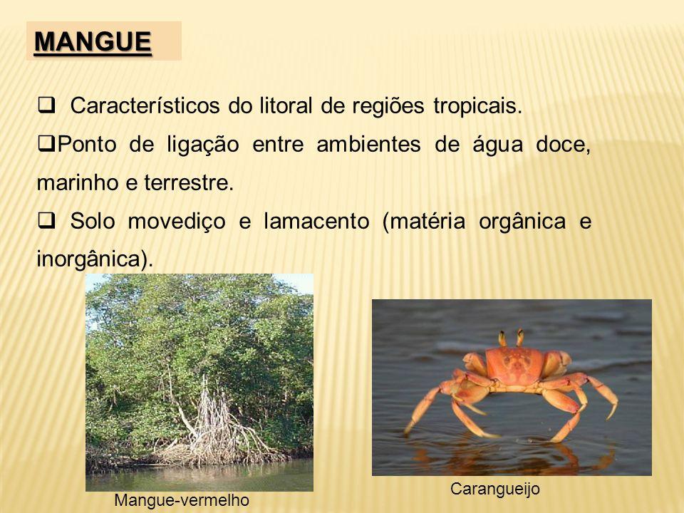 MANGUE Característicos do litoral de regiões tropicais.