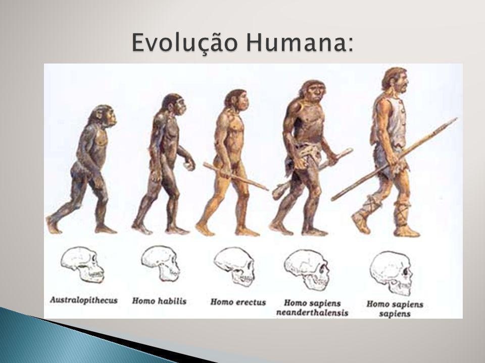 Evolução Humana:
