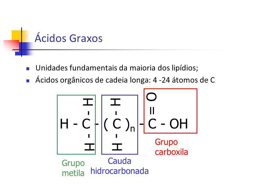= O - H H - C - ( C )n - C - OH Ácidos Graxos