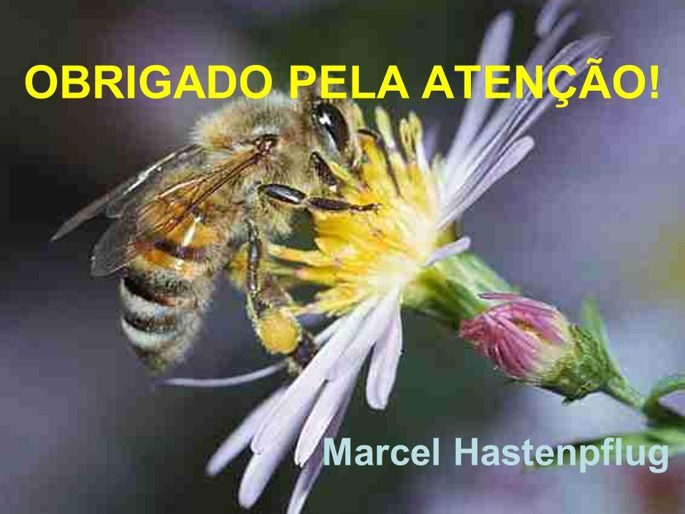 OBRIGADO PELA ATENÇÃO! Marcel Hastenpflug