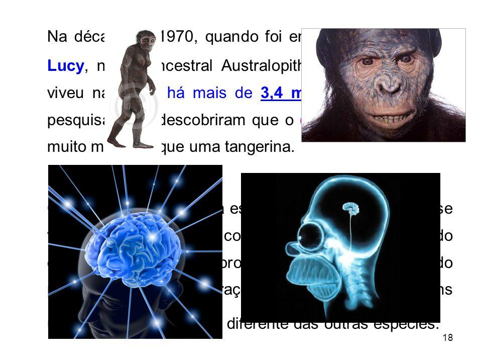Na década de 1970, quando foi encontrado o fóssil de Lucy, nosso ancestral Australopithecus afarensis, que viveu na África há mais de 3,4 milhões de anos, os pesquisadores descobriram que o cérebro dela não era muito maior do que uma tangerina.