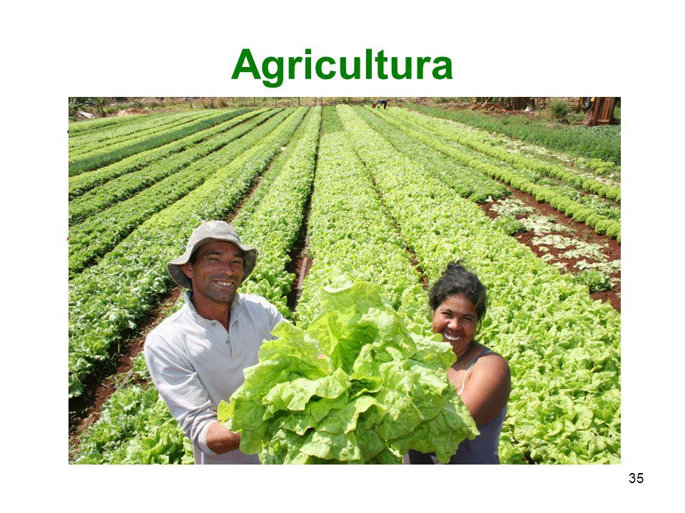 Agricultura Trabalho do campo; arte de cultivar.