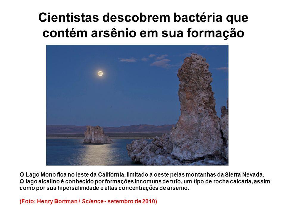 Cientistas descobrem bactéria que contém arsênio em sua formação
