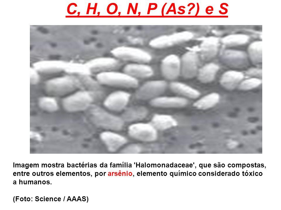 C, H, O, N, P (As ) e S Imagem mostra bactérias da família Halomonadaceae , que são compostas,