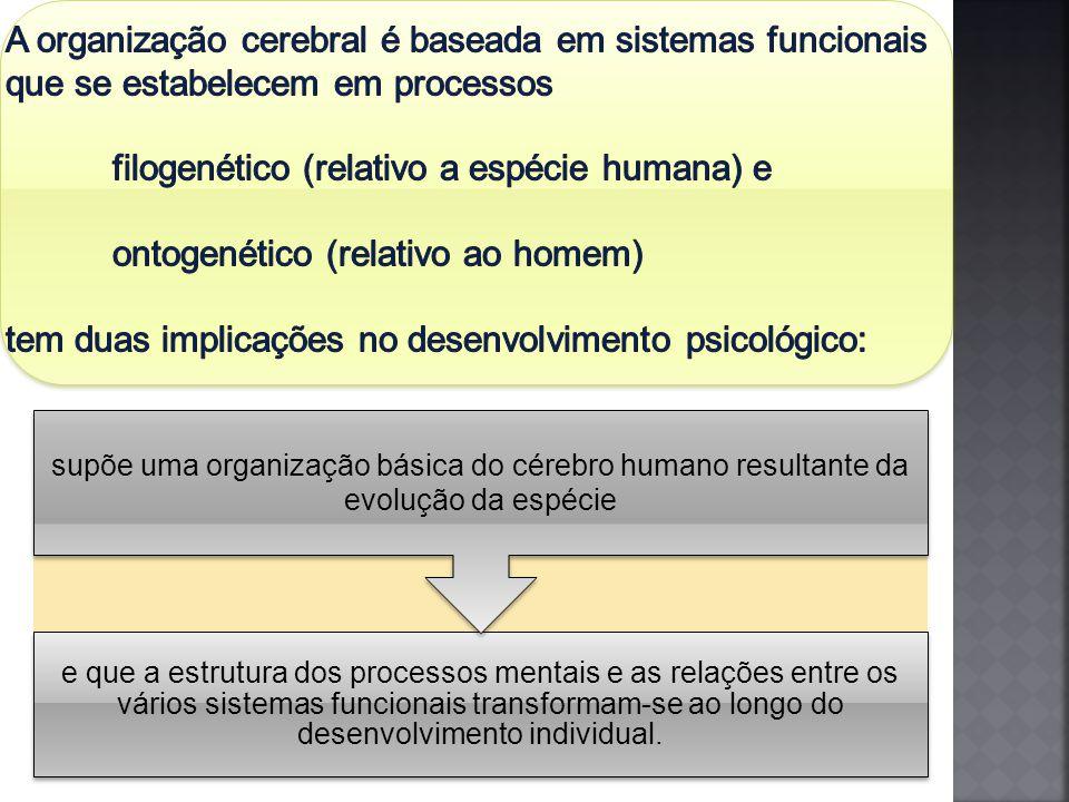 A organização cerebral é baseada em sistemas funcionais que se estabelecem em processos filogenético (relativo a espécie humana) e ontogenético (relativo ao homem) tem duas implicações no desenvolvimento psicológico: