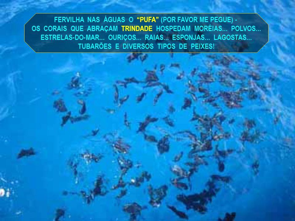 FERVILHA NAS ÁGUAS O PUFA (POR FAVOR ME PEGUE) -