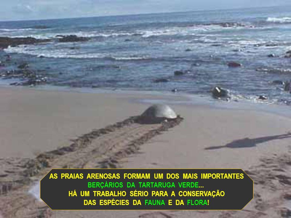 AS PRAIAS ARENOSAS FORMAM UM DOS MAIS IMPORTANTES
