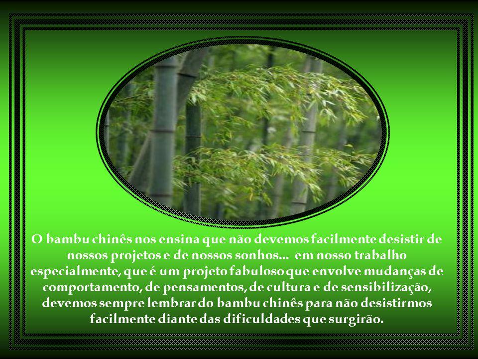 O bambu chinês nos ensina que não devemos facilmente desistir de nossos projetos e de nossos sonhos...