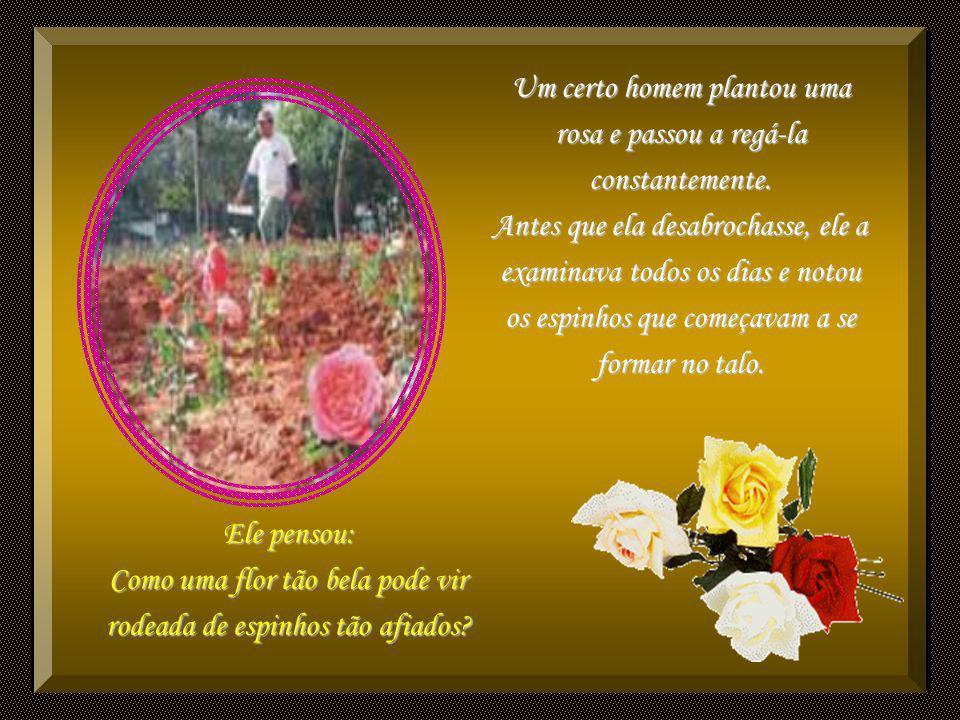 Um certo homem plantou uma rosa e passou a regá-la constantemente
