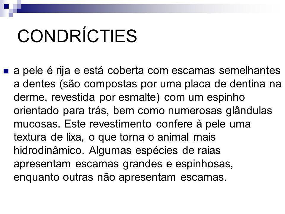 CONDRÍCTIES