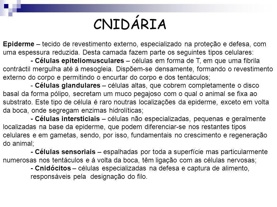 CNIDÁRIA