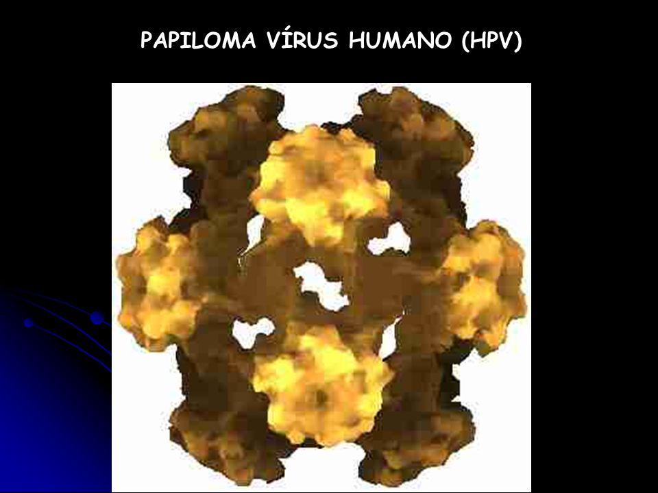 PAPILOMA VÍRUS HUMANO (HPV)