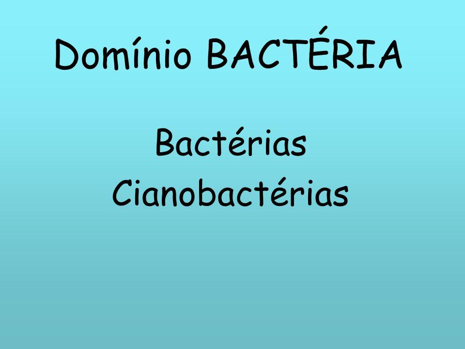 Bactérias Cianobactérias