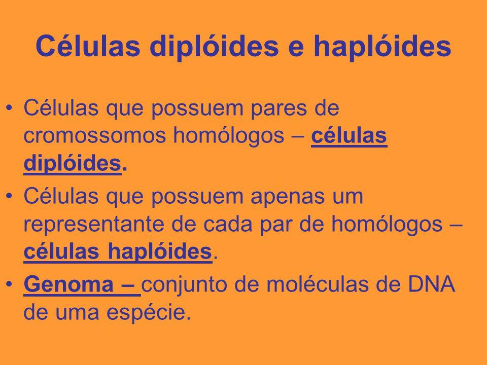 Células diplóides e haplóides