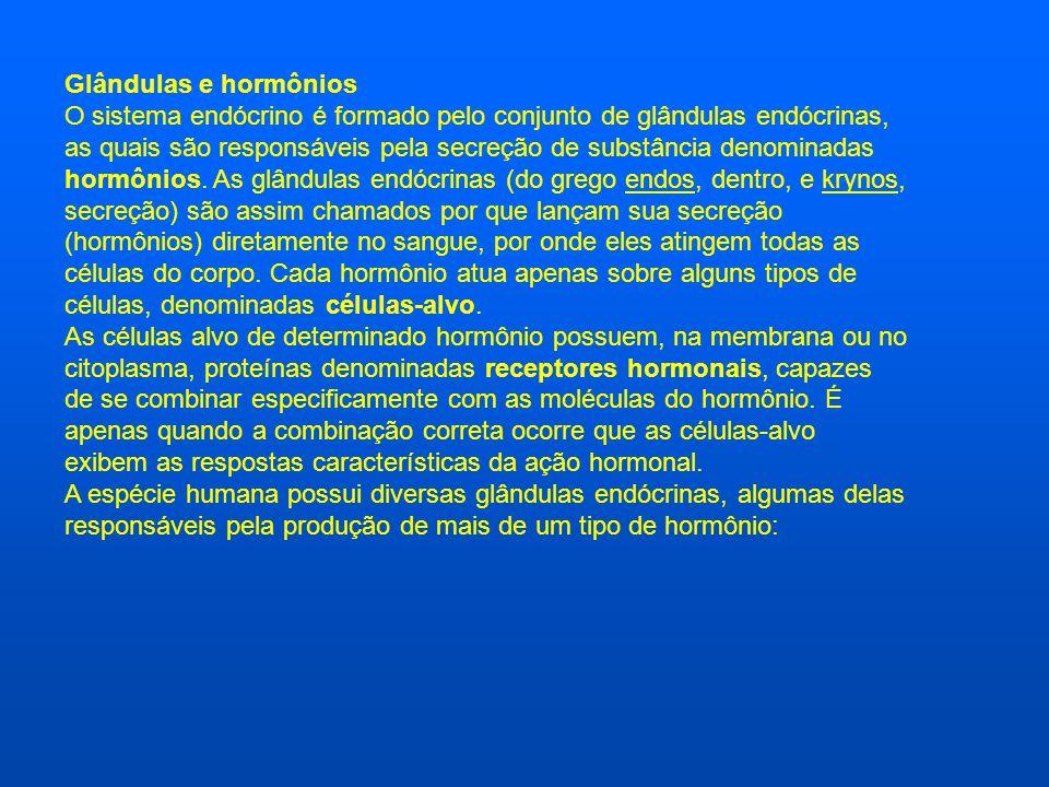 Glândulas e hormônios O sistema endócrino é formado pelo conjunto de glândulas endócrinas, as quais são responsáveis pela secreção de substância denominadas hormônios.