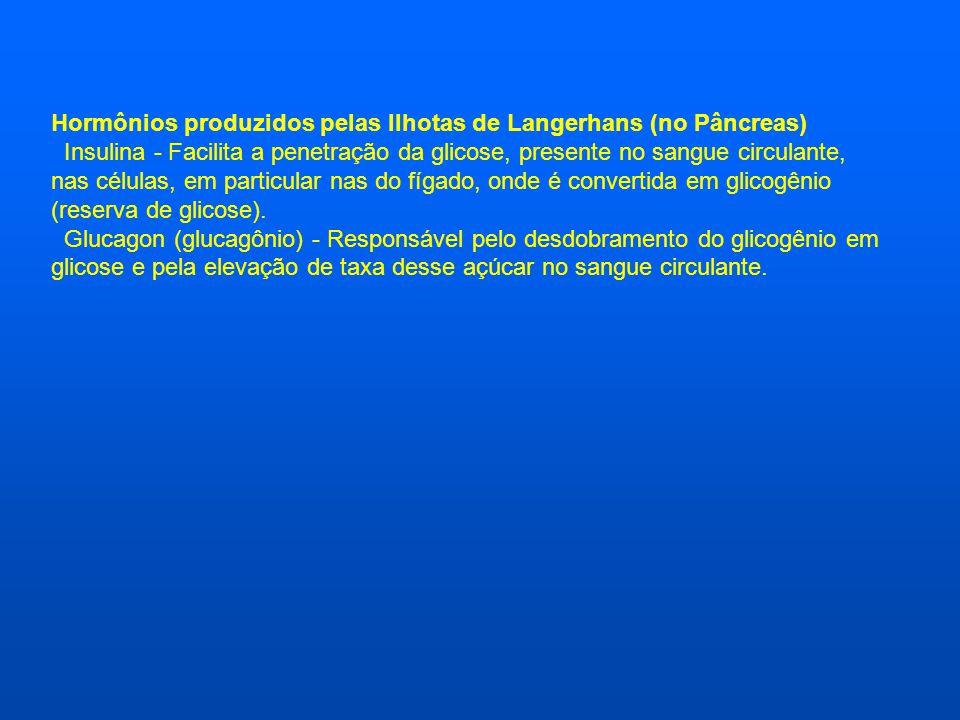 Hormônios produzidos pelas Ilhotas de Langerhans (no Pâncreas) Insulina - Facilita a penetração da glicose, presente no sangue circulante, nas células, em particular nas do fígado, onde é convertida em glicogênio (reserva de glicose).