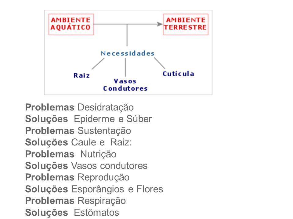Problemas Desidratação. Soluções Epiderme e Súber. Problemas Sustentação. Soluções Caule e Raiz:
