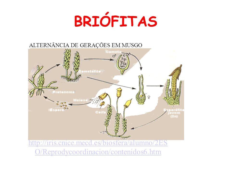BRIÓFITAS ALTERNÃNCIA DE GERAÇÕES EM MUSGO.