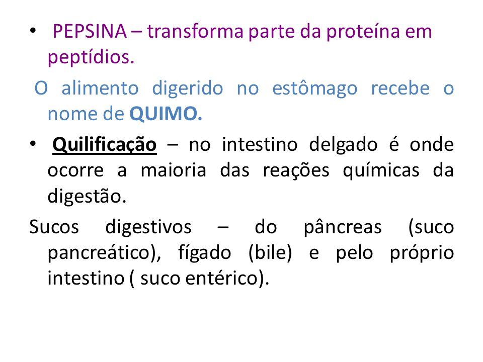PEPSINA – transforma parte da proteína em peptídios.