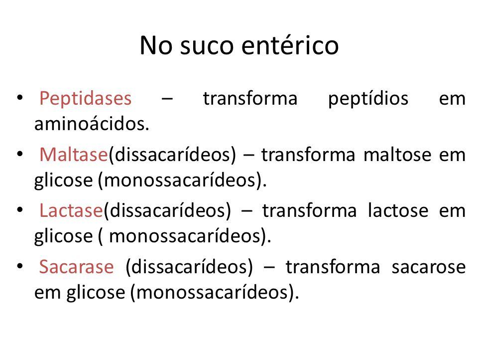 No suco entérico Peptidases – transforma peptídios em aminoácidos.